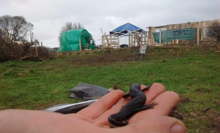 5 newt find
